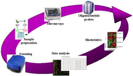 microarray analysis